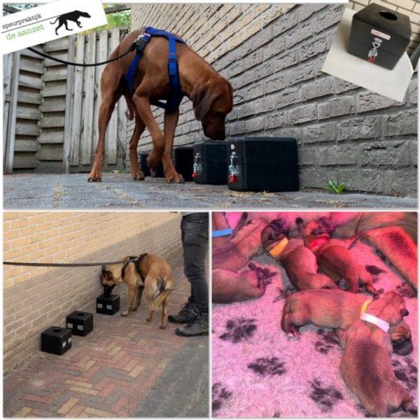 Detectie pup foto